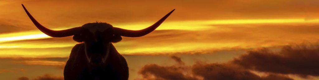 Texas-Header